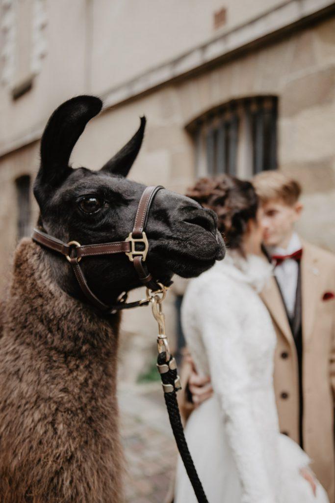 bretagne inspiration mariage lamas